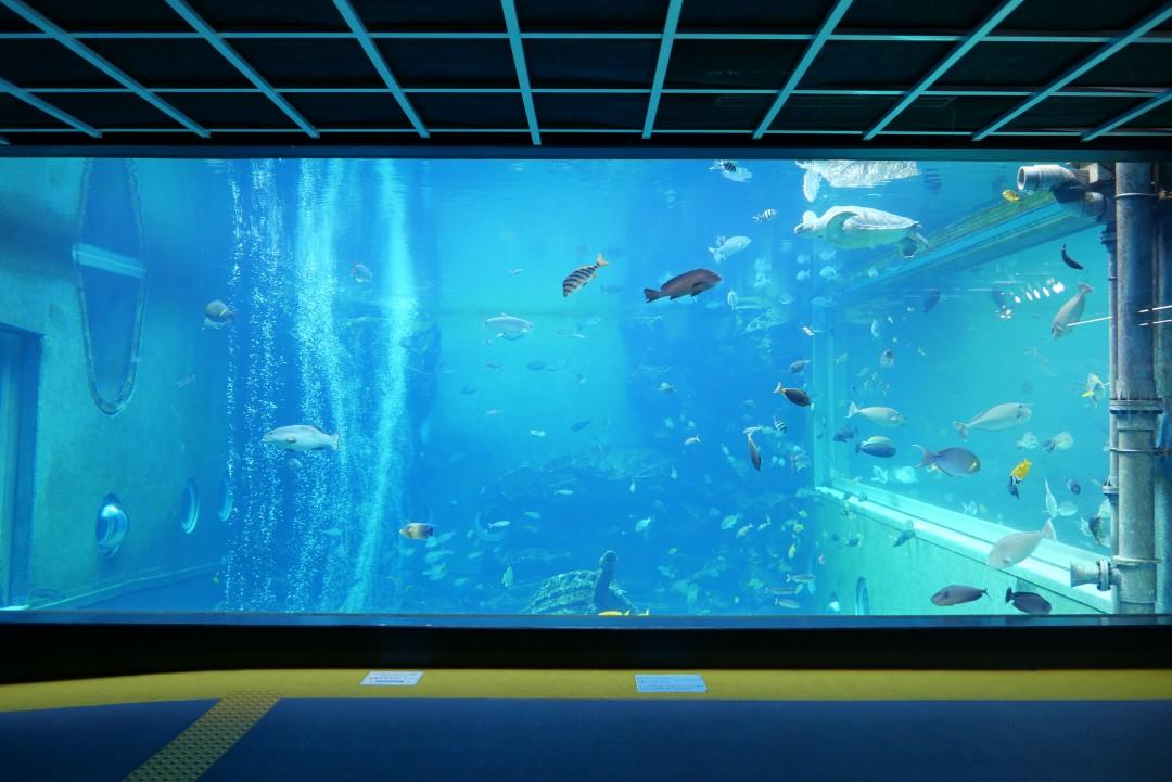 箱根園水族館0