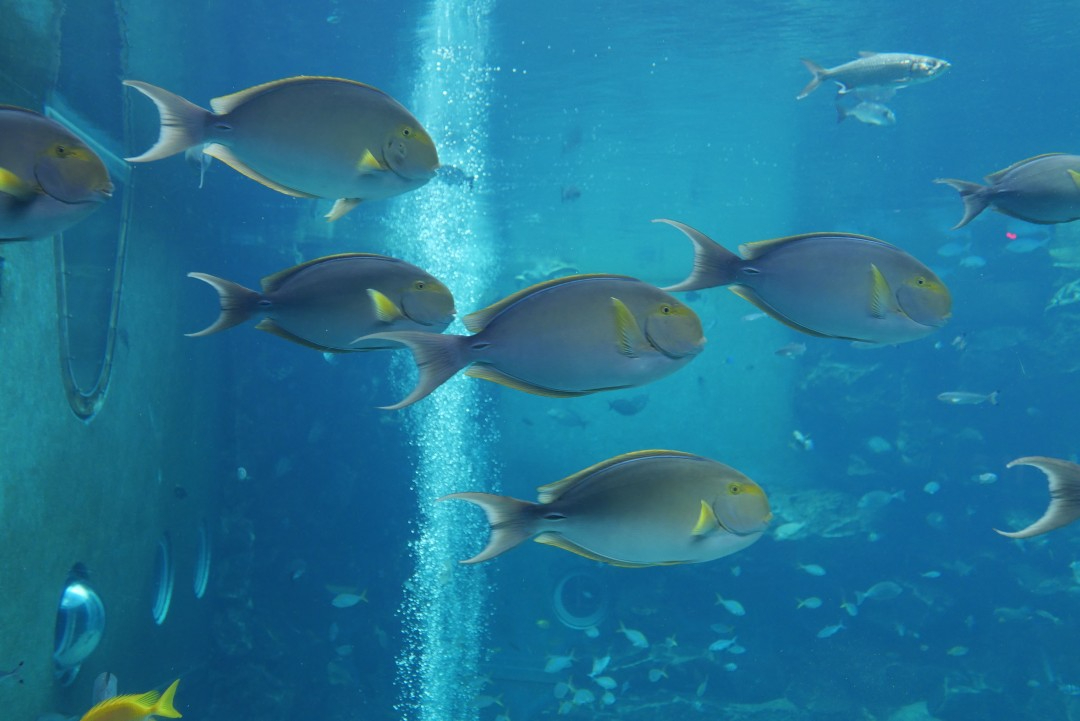 箱根園水族館1